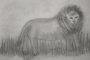 my lion drawing by ingeline-art