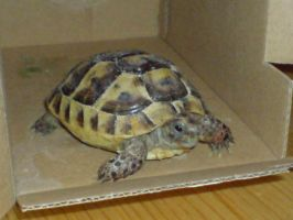 Shelby A'Tuin - Tortoise by moondial