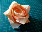 Angled Kawasaki rose by HolographicImaging