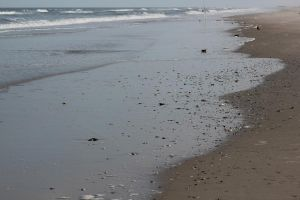 shells on the beach by taevans