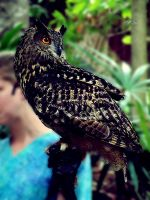 Great horned owl by crystallinus