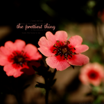 the prettiest thing by SaharaKnoblauch