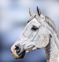 White Arabian Horse by xBiggers