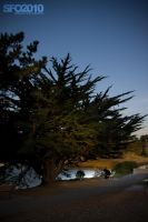 lake merced by massivefocus