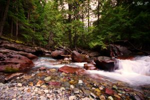 forest river by Yair-Leibovich