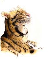 Clouded Leopard by Tsoi