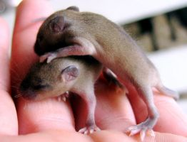 Newborn Field Mice... by since1916