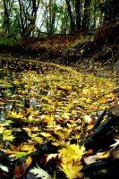 Leaves in the water. by Fredericton-high
