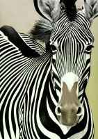 Zebra by Piombo