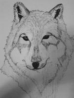 Wolf - QUICK SKETCH by ArchiFrancis