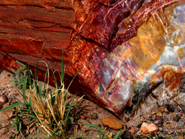 Petrified Forest - 1 by recursiveLoop