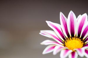 Pink Flower IV by adambrowning