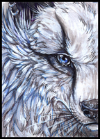 ACEO White by Isvoc