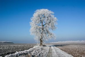 Winter tree by baari87