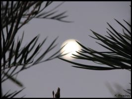 Moon through branches by p858snake