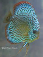 Blue Stripes by MorganeS-Photographe