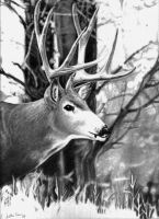 Buck it by Jcr3ws