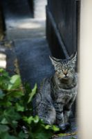 Cat in Montmartre by Heurchon