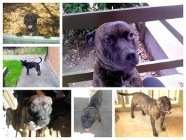 Buster Collage by Kargroth
