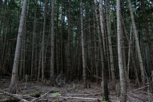 Dead Forest Stock by leeorr-stock