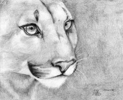december 2012 - Eyes of a cougar by NicoleSt