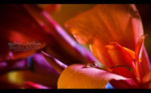 Waterdrop and a flower by ppLoKi