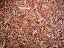 Wood Chips 2 by RosalineStock