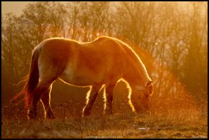 Evening grazer by Wolfling01