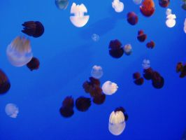 Jellyfish by Puglord