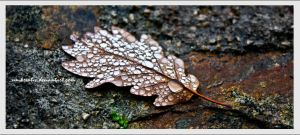 raindrops on a leaf by ah-fotografie-me