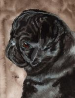 Black Pug by RamonaQ