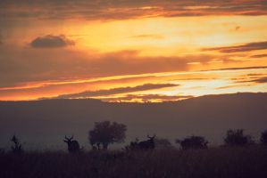 Morning Mara by siddhartha19