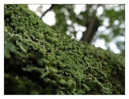 Moss I by Ede1986