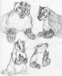 Badger doodles by MachineGunLullaby