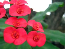 Red Flowers by my-dog-corky