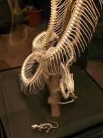 Snake and Mouse Skeleton by jelbo