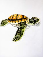 tortue by FDupain
