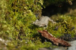Skink by turlough