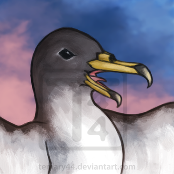 Cory's Shearwater Icon by temary44