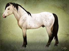 BH Dexter - Pony by BH-Stables