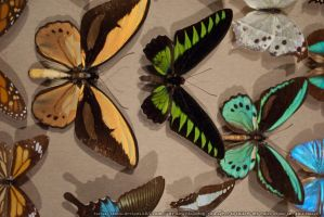 Butterflies : 10 by taeliac-stock