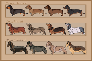 Dachshunds adoptables - CLOSED by ForeignFrontierRanch