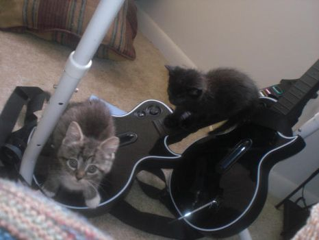 Kitten's playing GuitarHero by mocha15