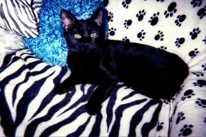 Rava the Beautiful Black Cat by bluebellangel19smj