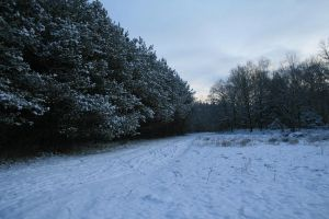 Stock background snow forest III by MariKariS