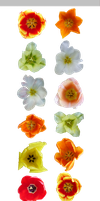 PACK Tulipa mix - STOCK by resMENSA