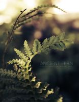 Ancient Fern by KovoWolf