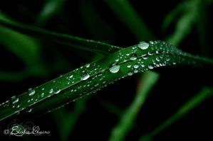 Raindrops by NawenC