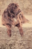 My doggy by marinsuslic