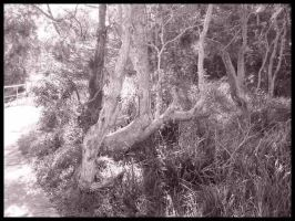 Thicket by addon